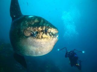 Galapágy - fotenie Mola - mola