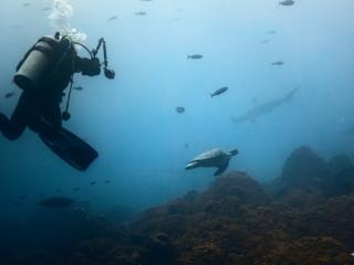 Galapágy - naháňame žraloky