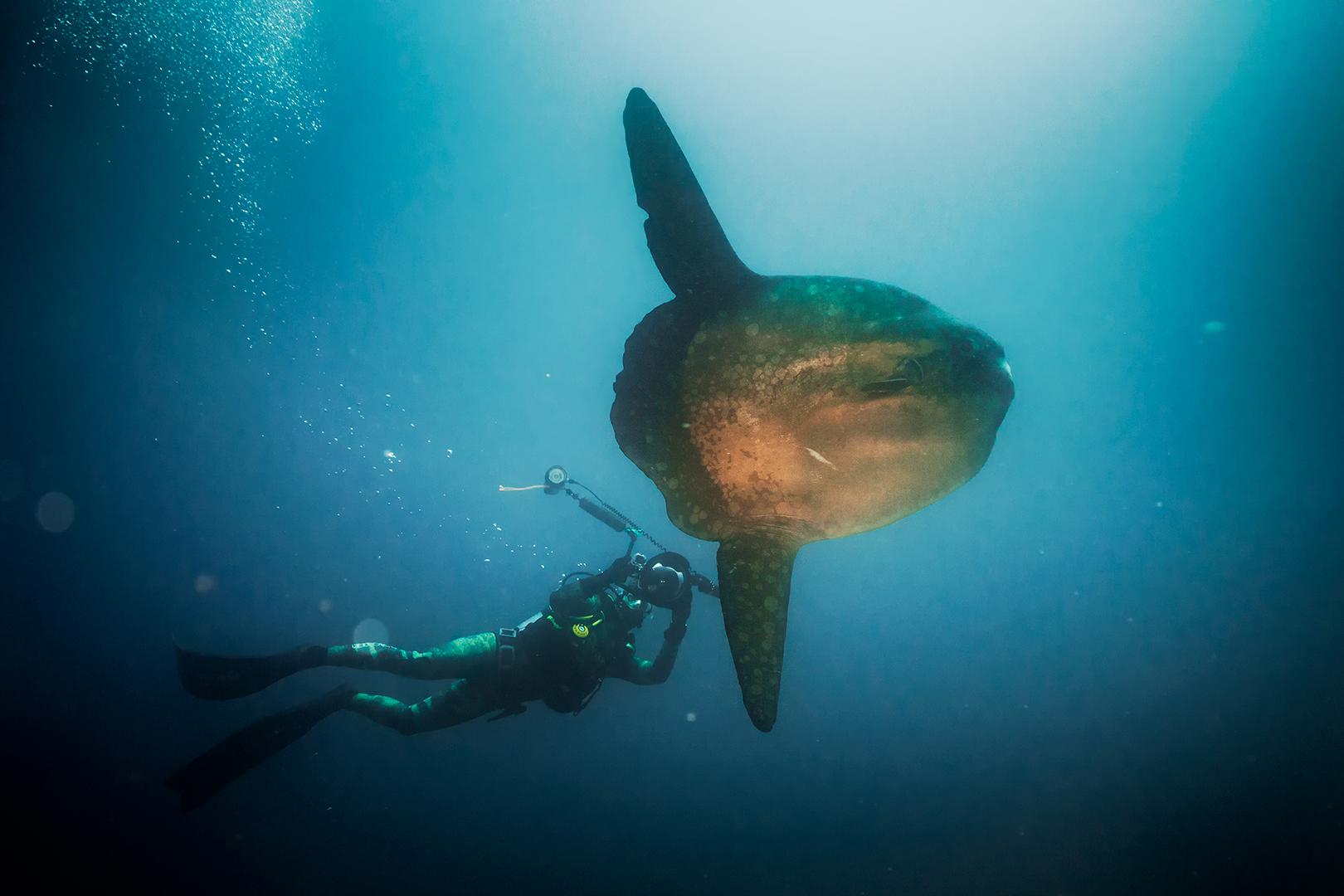 Galapágy – podvodná fotografia