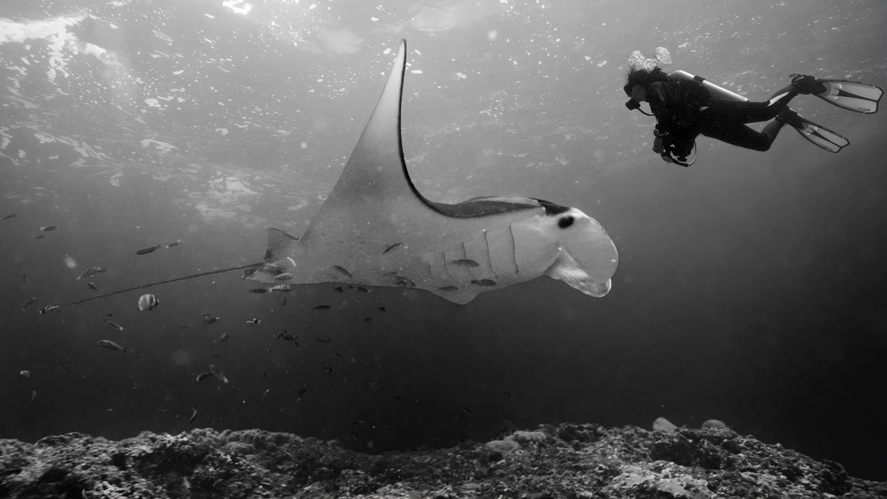 Bali – podvodná fotografia