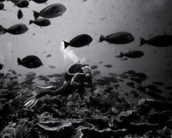 Komodo – podvodná fotografia / BW