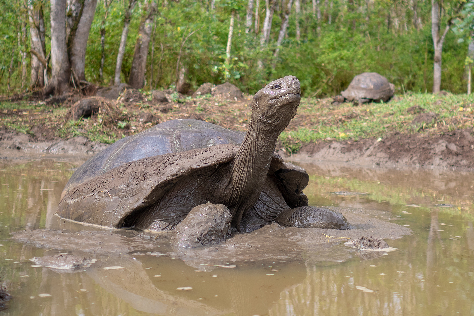Galapágy – Wildlife