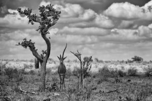 Keňa – Wildlife